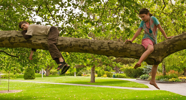 Illegal to climb trees in Canada