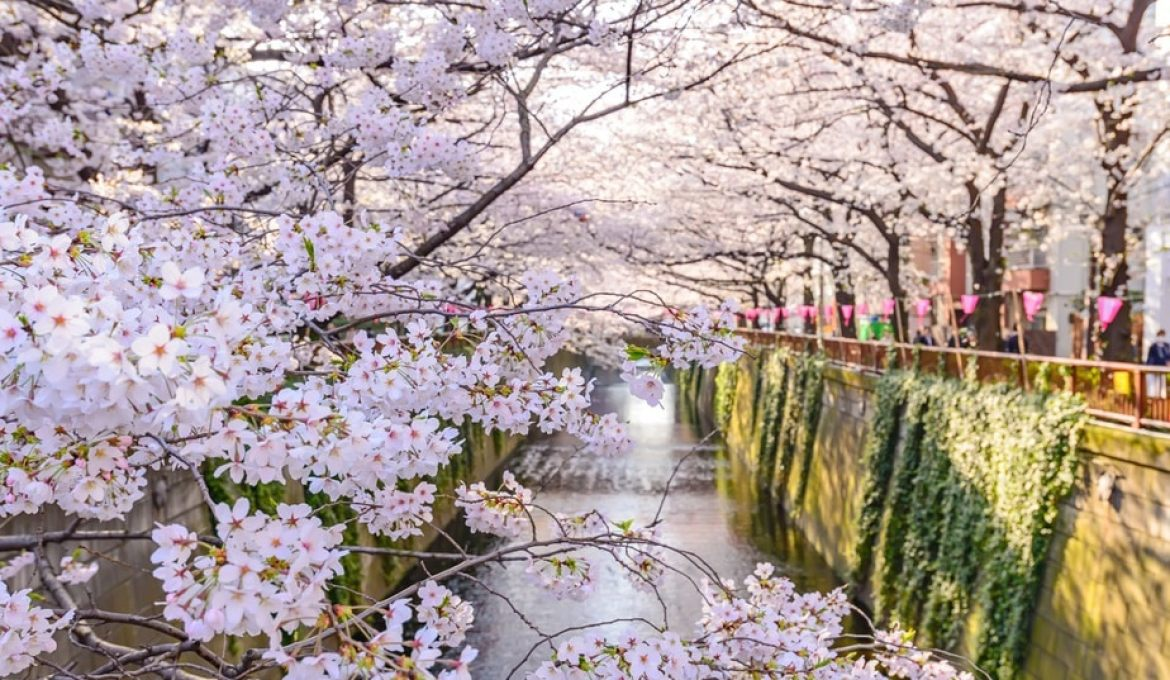 Cherry Blossom Season in Japan 2019: Where and When to See Sakura