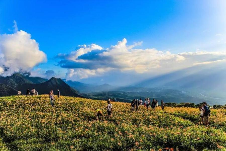 Mt. Liushishi Daylilies: Hualien, Taiwan