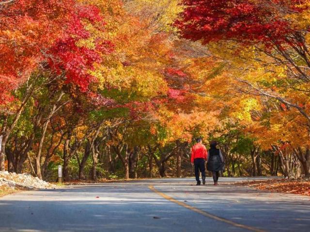 Thanksgiving with the Family: South Korea