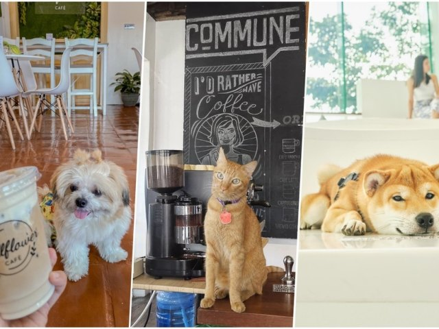 Pet-Friendly Cafes In Metro Manila For Cat And Dog Lovers