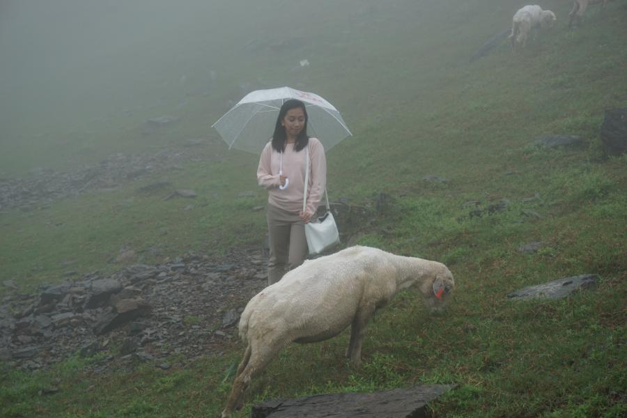 Qingjing Farm