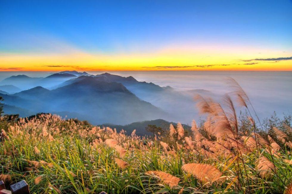 Image result for taiwan alishan