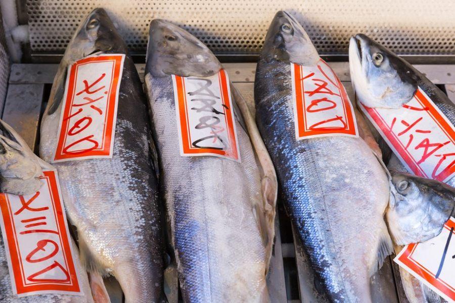 Tokyo, Japan: Tsukiji Fish Market