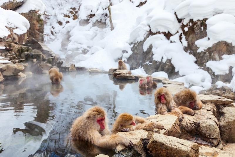 Where to Travel in Japan During Winter: Jigokudani Monkey Park