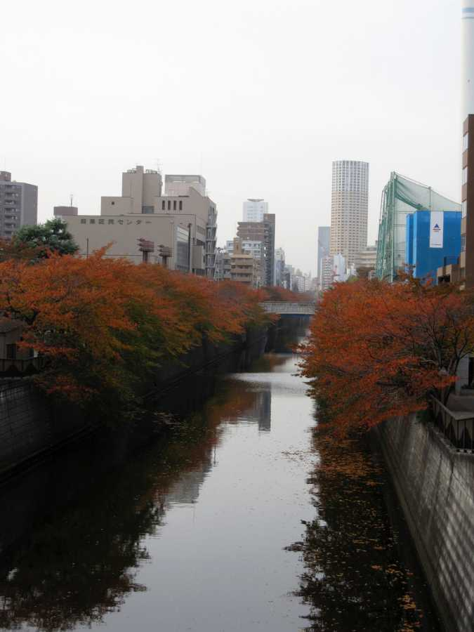 Cherry trees along Meguro River (image via mari, Flickr)