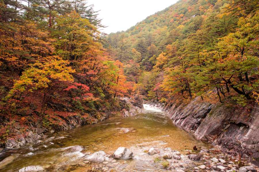 Unleash your inner poet with Odaesan's captivating autumn scenery (image via Shutterstock)