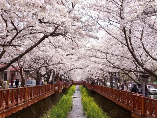 The World's Most Beautiful Flower & Tree Tunnels