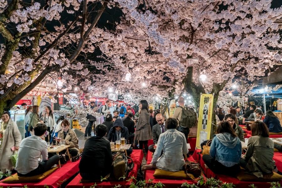 Hanami in Japan