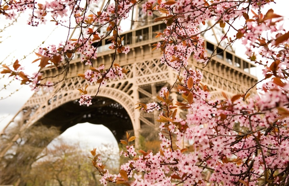 Wonderful Cherry Blossom Destinations Outside Asia (And When to Visit!)