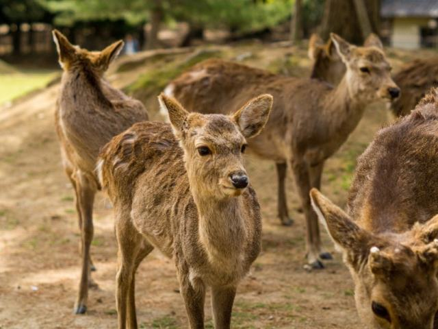 A First-Timer's Sightseeing Guide To Nara Park