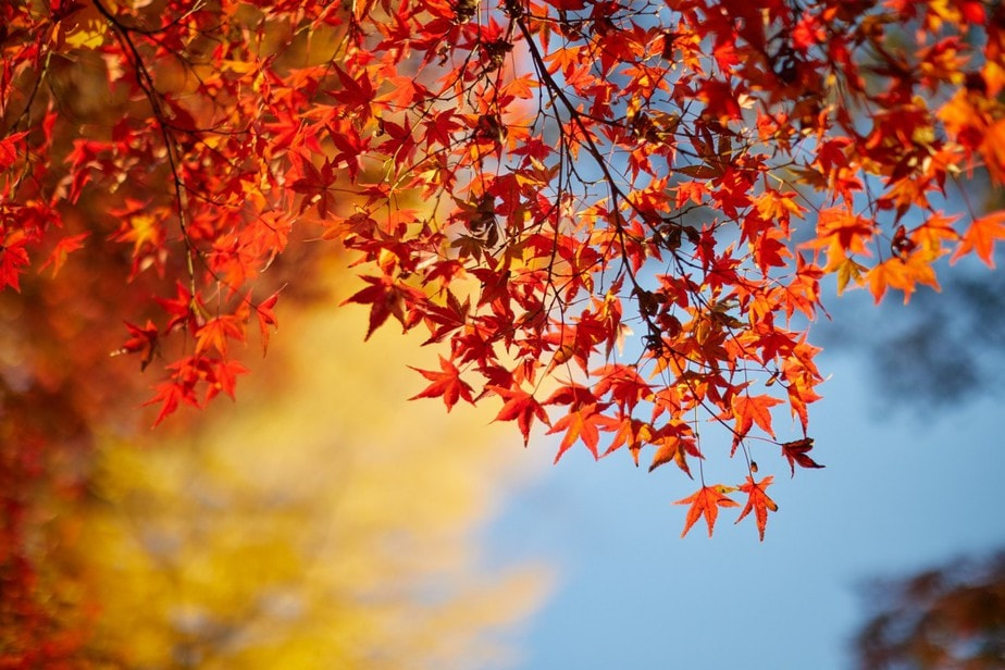 Most Stunning Fall Destinations in Japan We're Daydreaming of Right Now