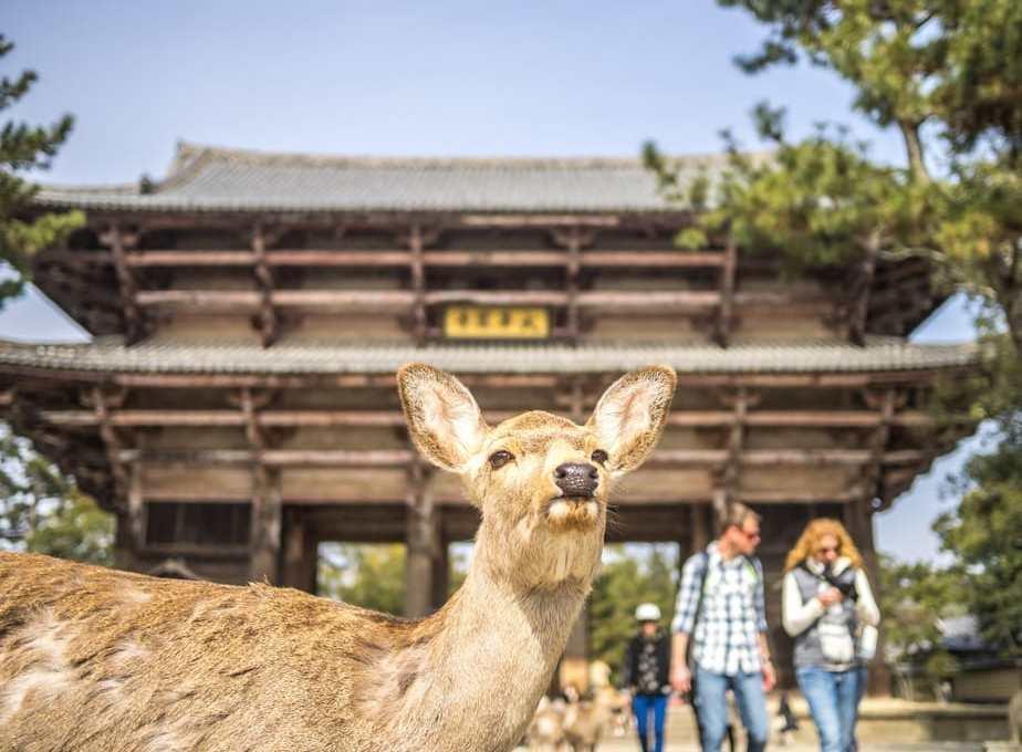 A Day In Nara, Japan