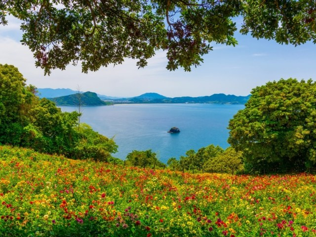 Fukuoka In Spring: Where To Go and What To Do