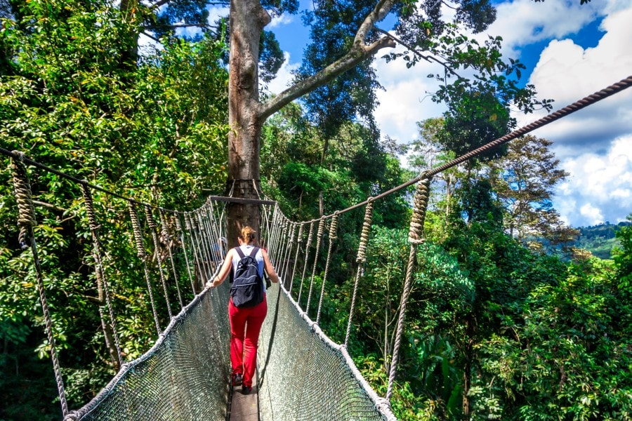 Poring Canopy Walk View