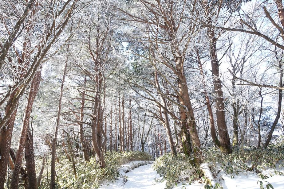 What To Do On Jeju Island This Winter