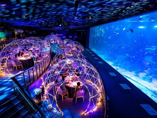 8 Awesome Things To Do At S.E.A. Aquarium On Your Visit
