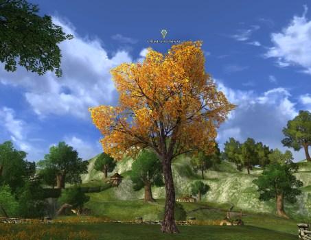 Autumn Elm Tree