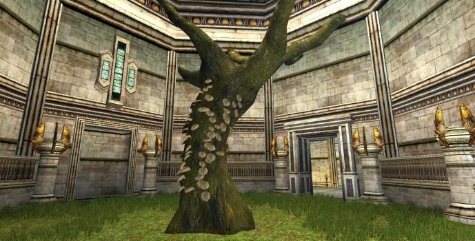 Ancient Beech Tree