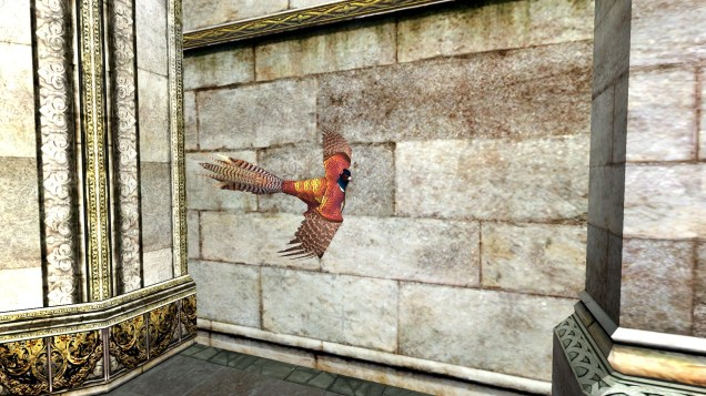 pheasant (19)