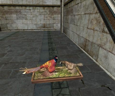 Wild Pheasant Exhibit