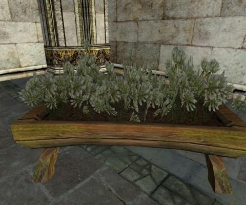 Raised Planter of White Clover