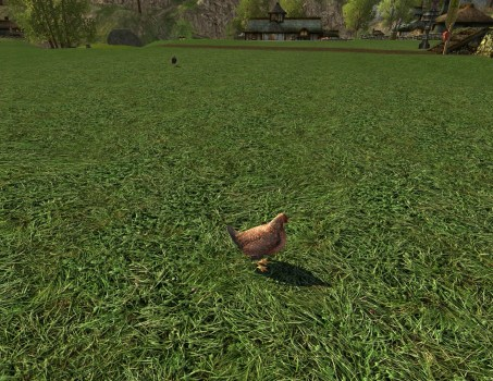 Orange Wyandotte Lawn Chicken