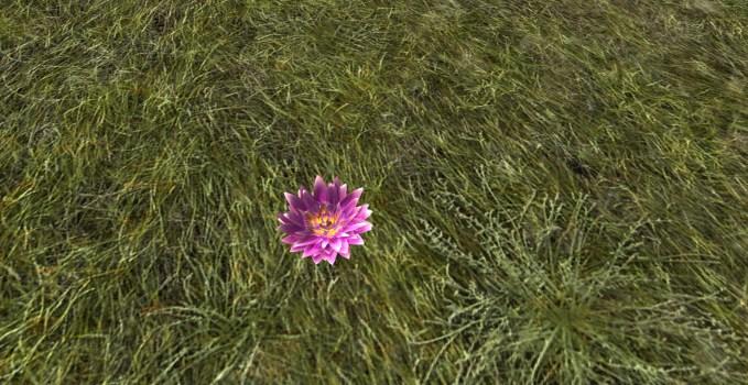 Lossarnach Lily