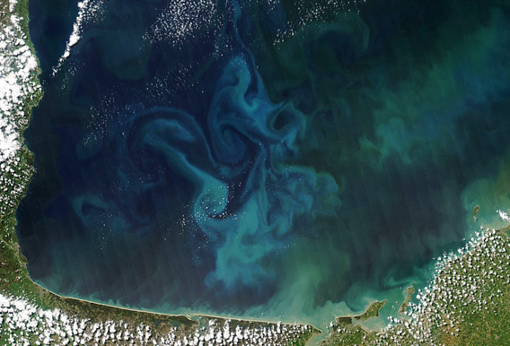 In April, 2013, NASA's Aqua satellite captured this true-color image of the dynamic growth of a springtime phytoplankton bloom in the Bay of Biscay, off the coast of France.  Read more about this image here.