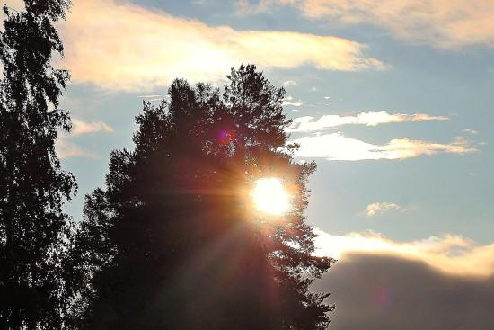 Glänzendes Licht mit den Strahlen, die durch einen hohen Baum gegen einen blauen Himmel mit Wolken scheinen.