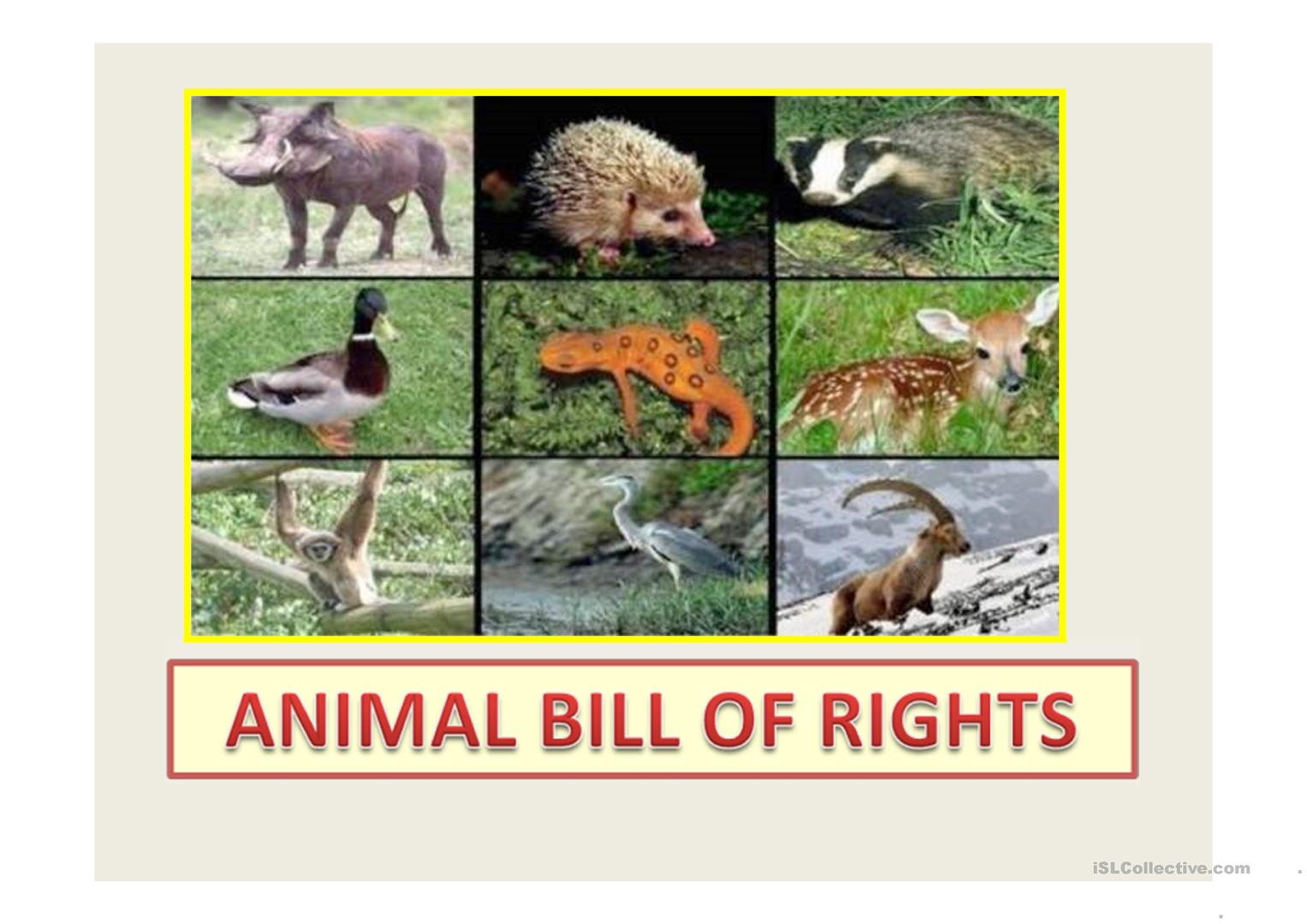 Animal Bill Of Rights Worksheet
