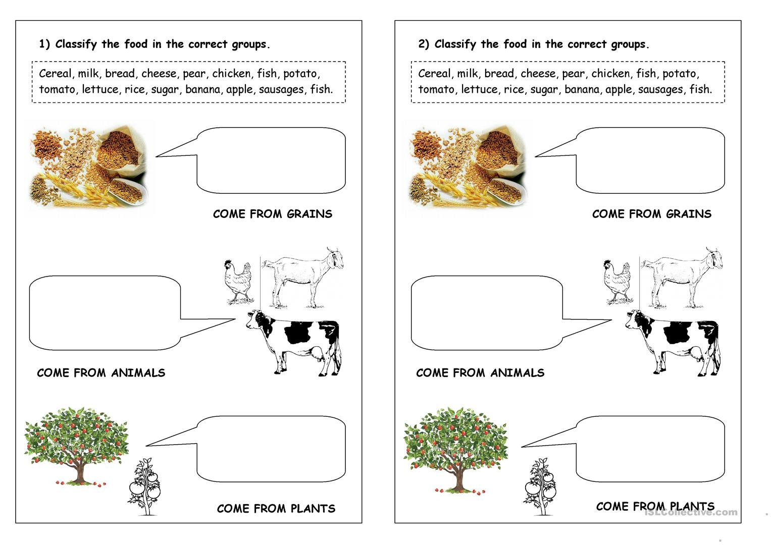 Plant Worksheet Esl