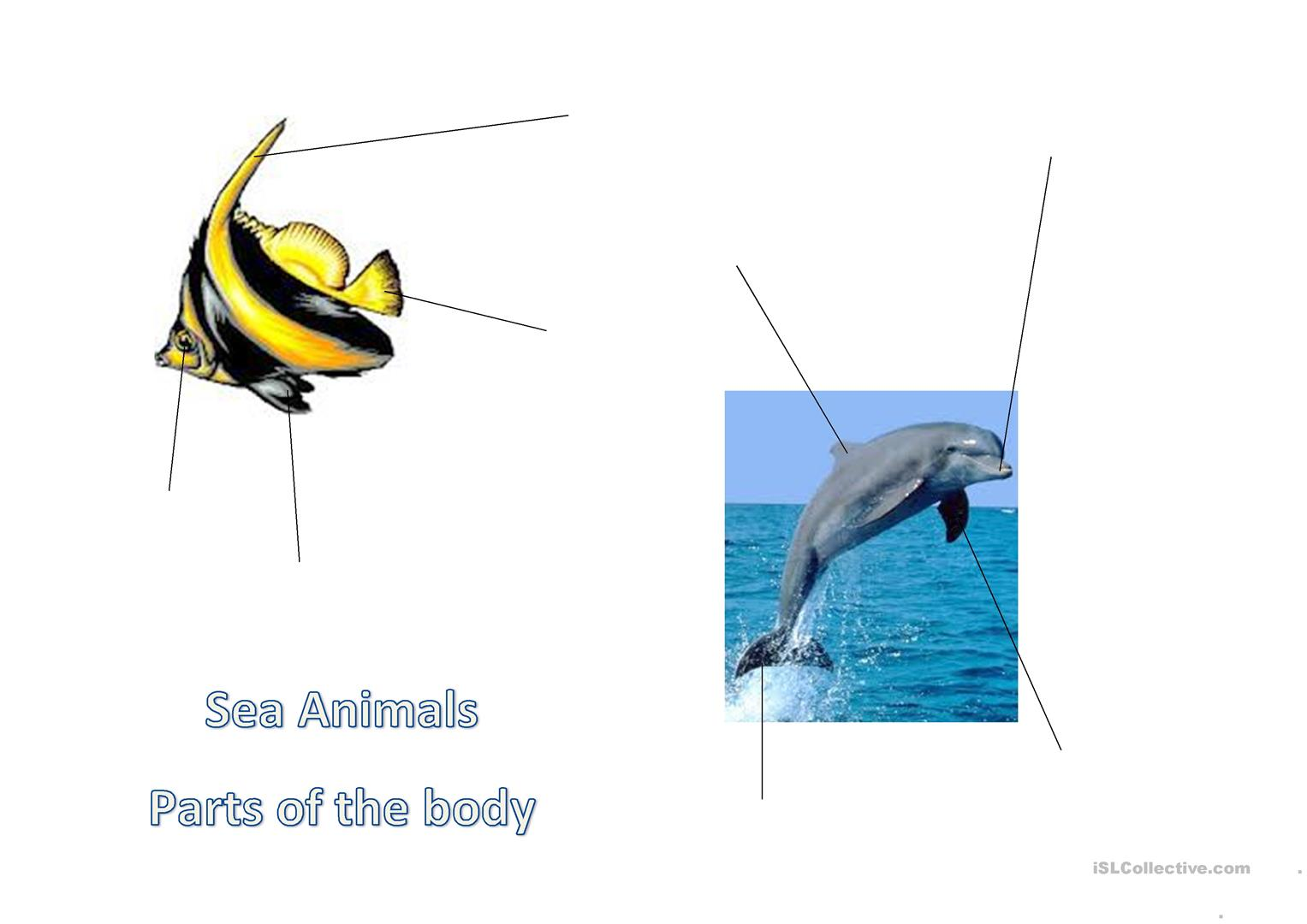 Parts Of The Body For Sea Animals