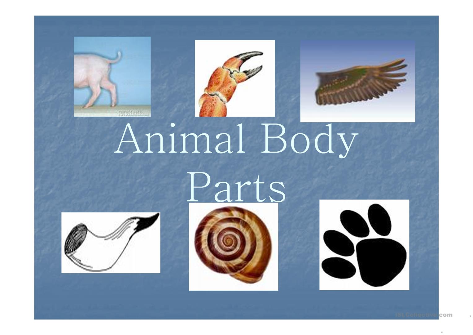 Animals Body Parts Ppt Worksheet