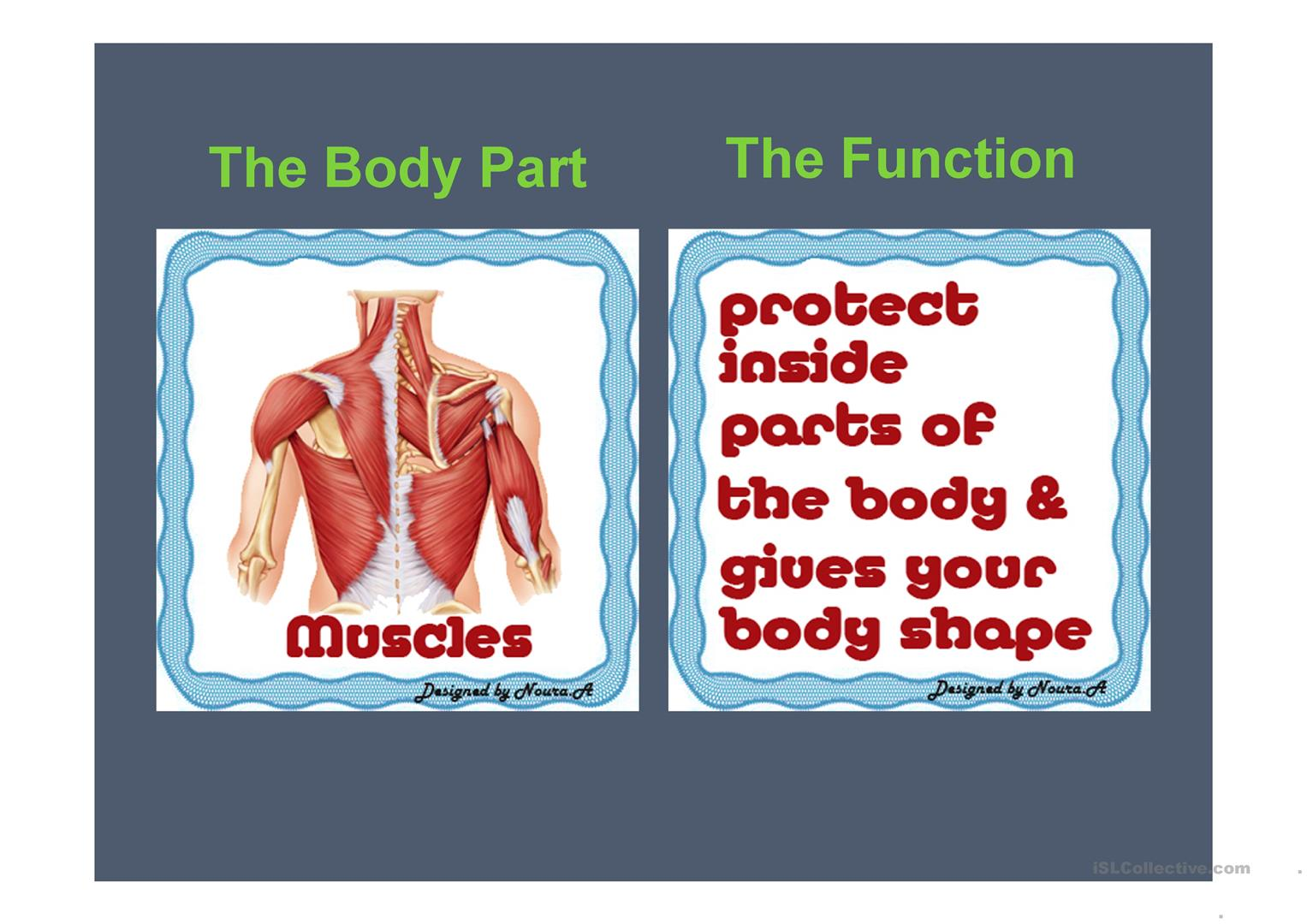 Internal Body Parts And Their Functions Worksheet
