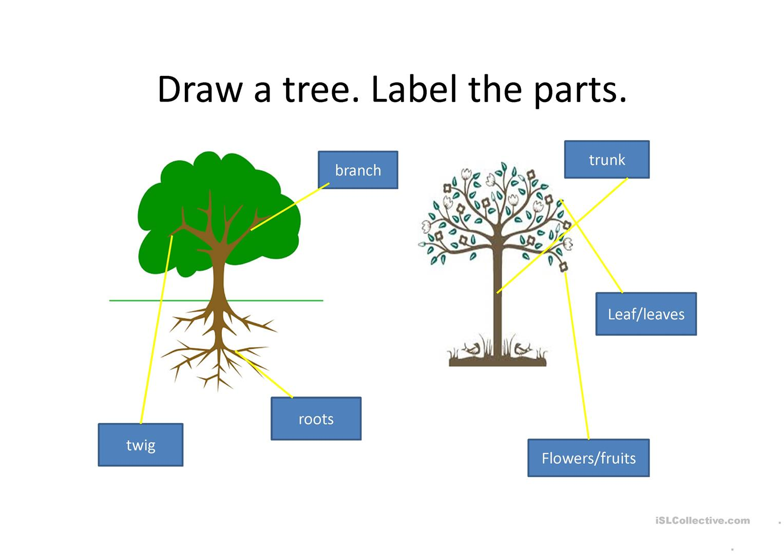 All About Trees Worksheet