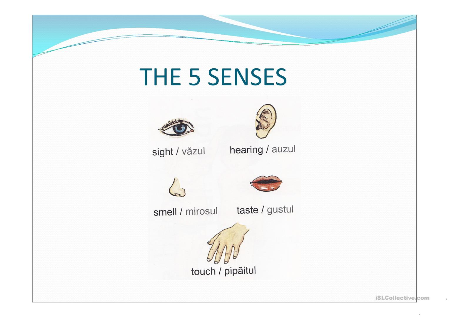 The 5 Senses Worksheet