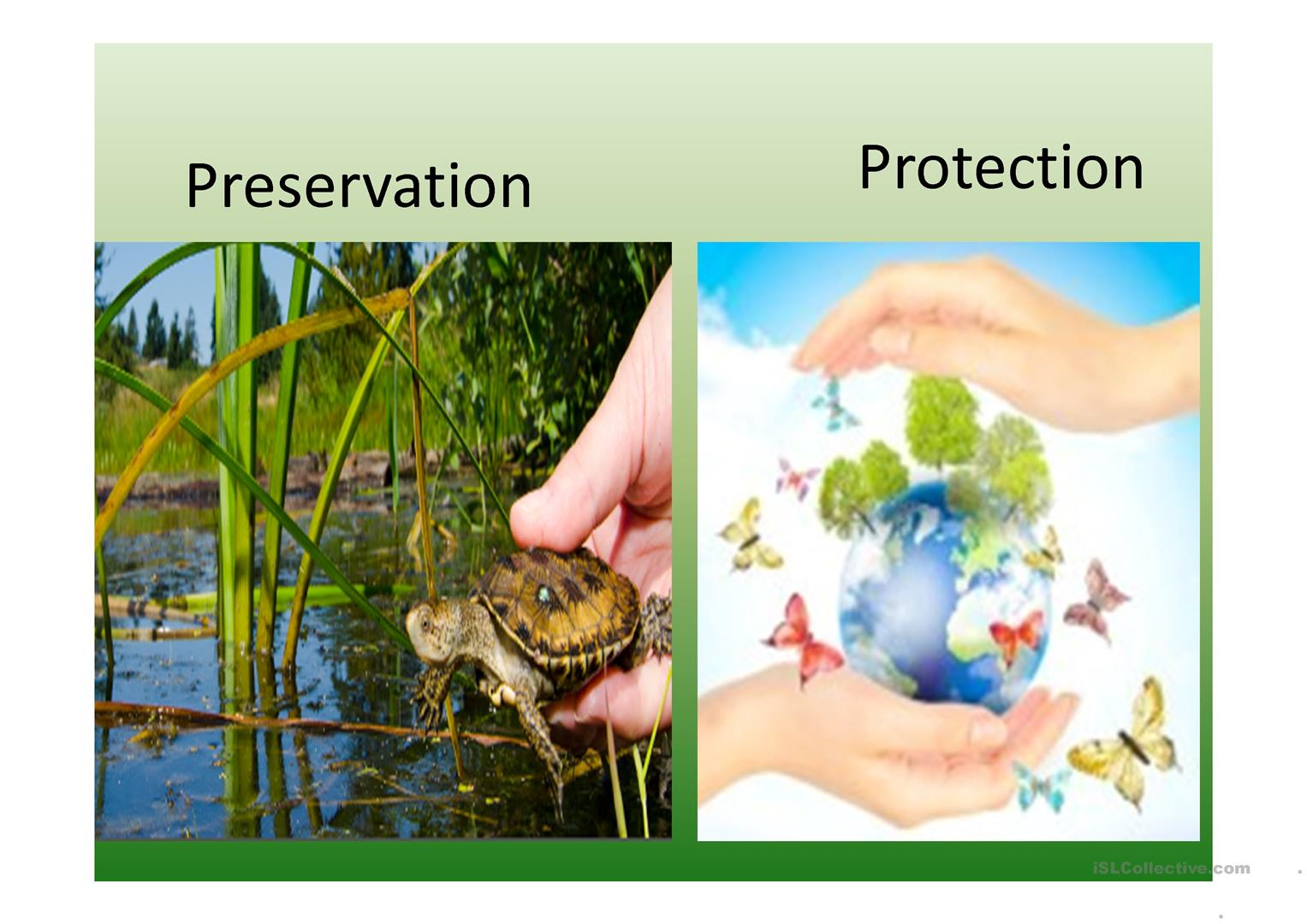 Environment Pictures Worksheet