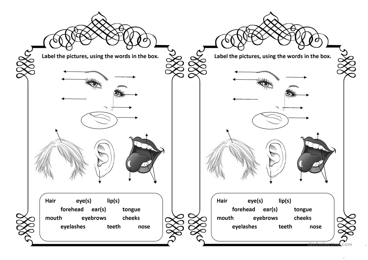 Body Parts Worksheet For Beginners