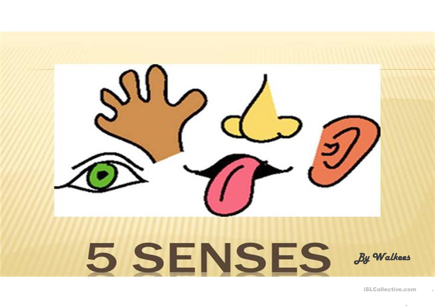 5 Senses And Body Parts