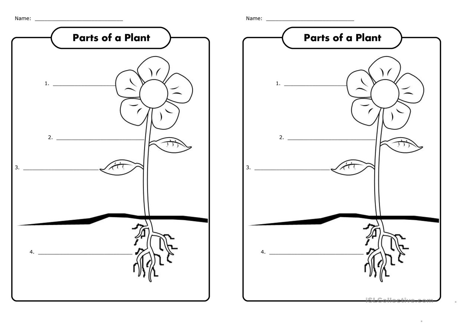 Flower Parts Worksheet Answers