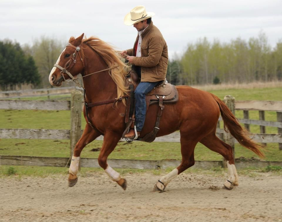 Image result for riding a horse