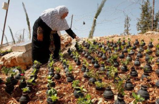 PALESTINIANS GROW FLOWERS IN SPENT ISRAELI TEAR GAS GRENADES
