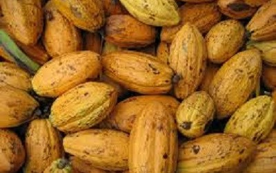 INDONESIA SET TO BECOME WORLD`S LARGEST COCOA PRODUCER