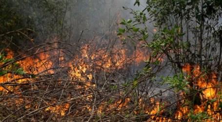 Satellites detected 801 hotspots across Indonesia: BNPB