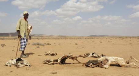 UK Announces £10 million For Somalia's Drought Relief Efforts