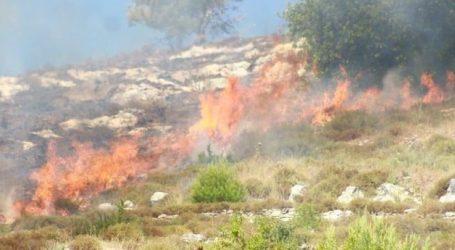 Israeli Settlers Burn Olive Trees in Nablus, Palestine