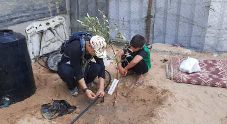 Jama'ah Muslimin Launches Thousand Olive Tree Waqf Program for Gaza