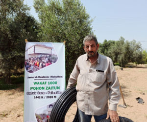 Jama'ah Muslimin Plants More than 1,000 Olive Trees in Gaza