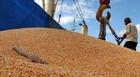 Indonesia Export 6,100 tons of Corn from Sulawesi to Philippines